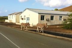 Georgetown donkeys