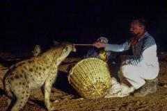 Hyena Photo