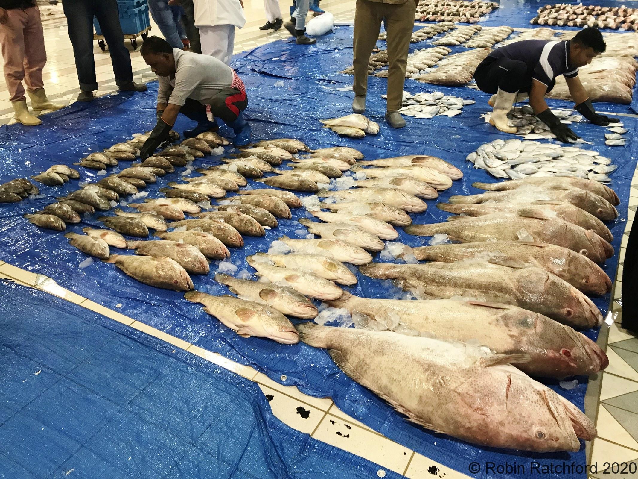 Kuwaiti Fresh Fish Market